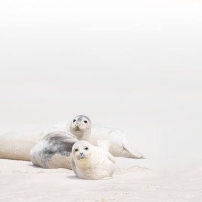 zeehondjes